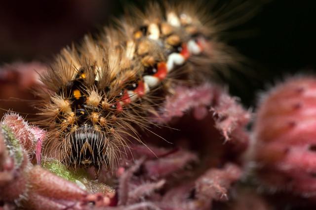 Fuzzy Eater, Pt. 3 - _TNY_1053