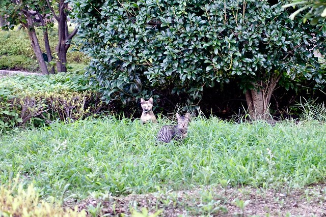 Today's Cat@2019-09-14