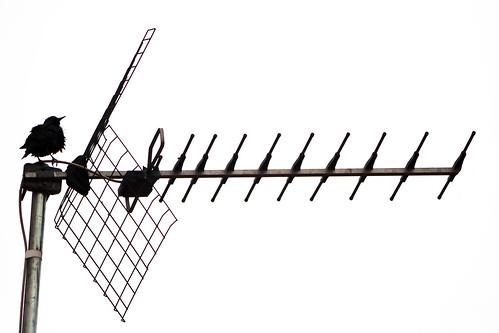 Pajaro antena_