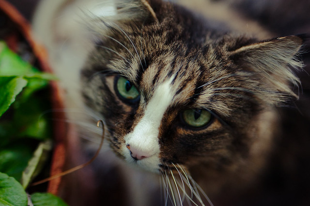 Stella Kitty