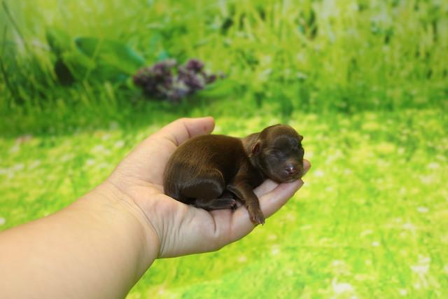 1 Stitch 4oz 1 day old (3)