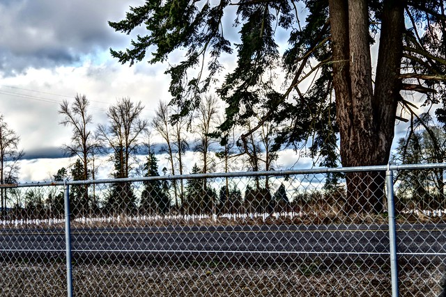 Chain Link Fence, Baby & Gigantic Trees, Pretty Clouds