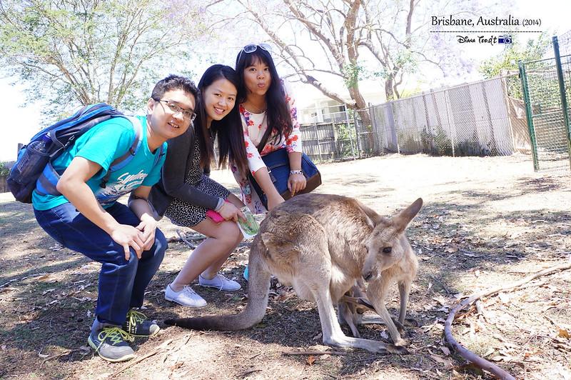 Brisbane Lone Pine Koala Sanctuary 15