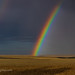 Rainbow over Wheatfield