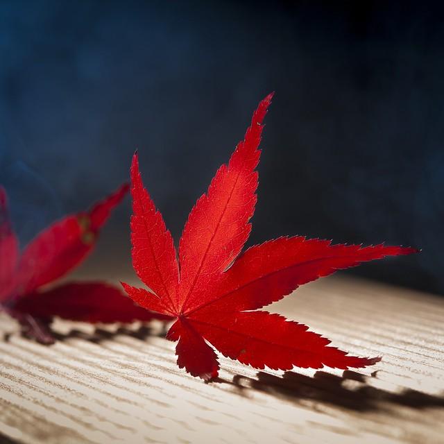 Shining red 🍁