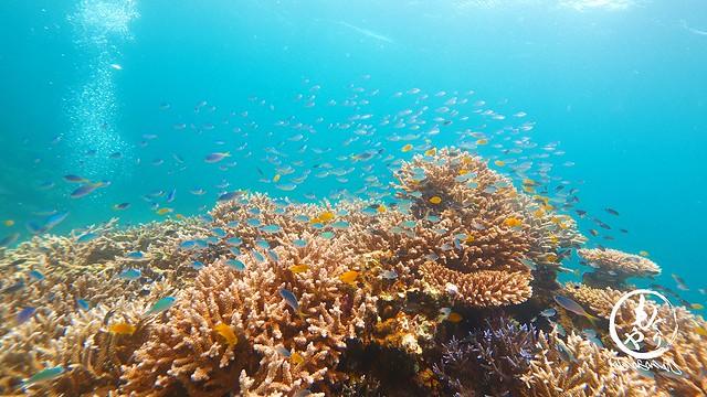 イチオシの珊瑚ポイント