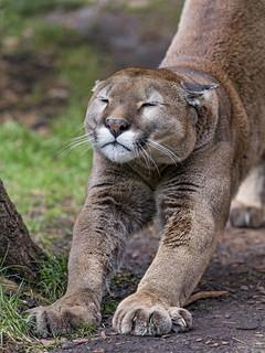 Garfield stretching