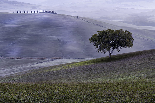 Lone Tree with Early Morning Light - Tuscany Details 12