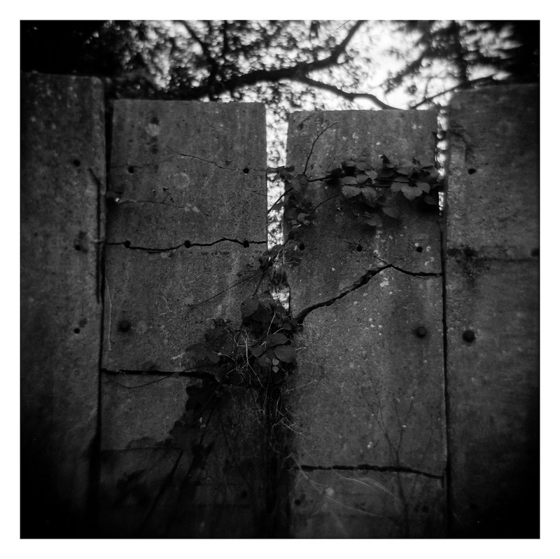 FILM - Holga (mis)adventures #11