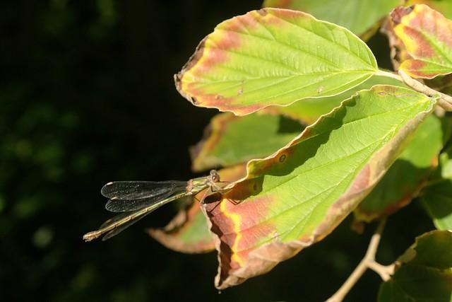 Clinging to a leaf