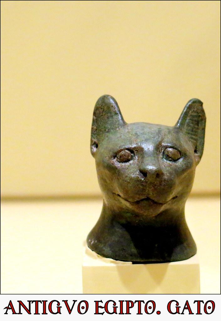 Cabeza de gato
