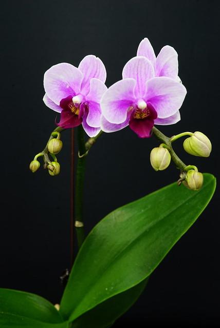 Orchids 20190914