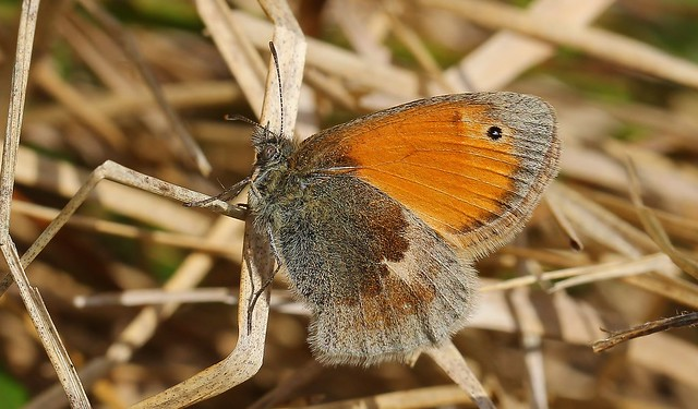 Small Heath 130919 (1)