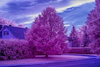 Super Color Infrared (590nm)