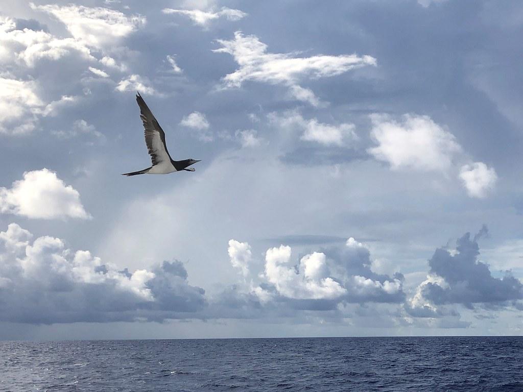 途中から急に現れた鳥たち。船の横を30分くらい並走して狩りをしていました!