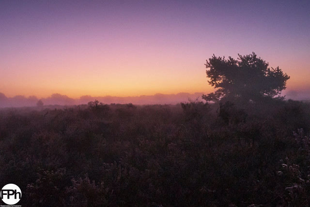 Purple Sunrise over Moorland