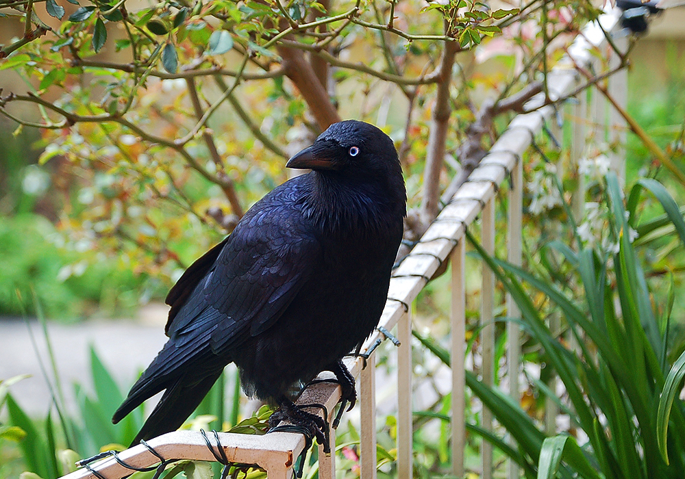 _our_raven_2_
