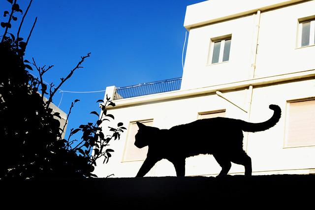 Crete Cat