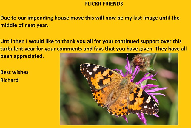 Flickr Friends