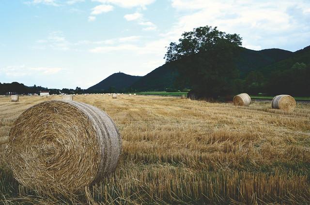 Le temps de la moisson  -  The time of harvest