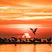 Sandbar Sunrise