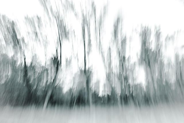 Se necesita un solo árbol para hacer un millón de cerillas, y una sola cerilla para quemar un millón de árboles.