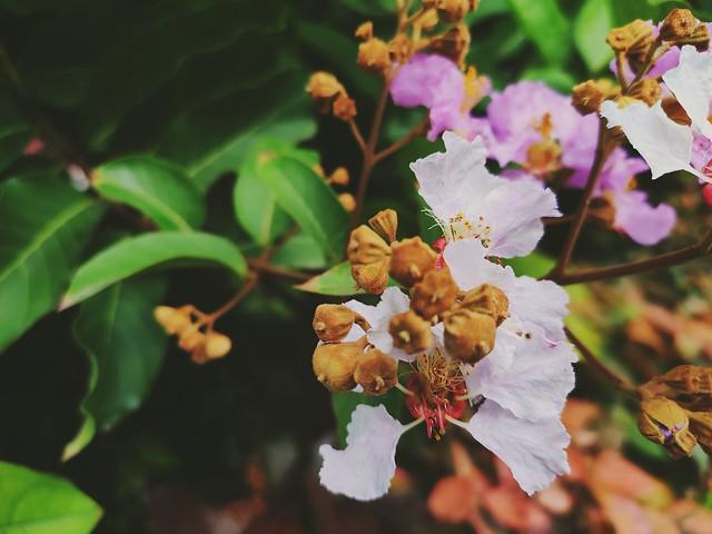 Buds n flowers