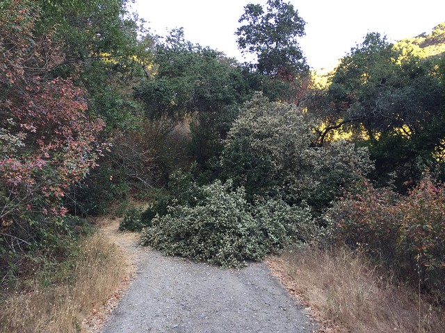Fallen tree on the trail