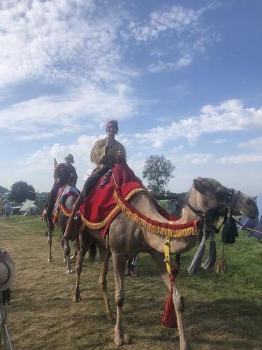 Camels at Greenbelt