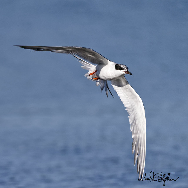 Tern, turns...
