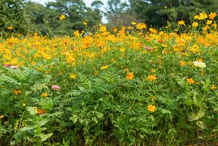 Butterfly Garden NBG 24