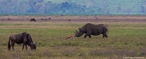 2019.06.09.4069 Rhinoceros