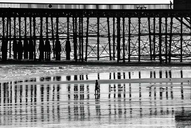 Camouflaged in the pier reflection