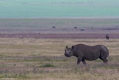 2019.06.09.4113 Rhinoceros