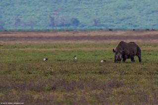 2019.06.09.4062 Rhinoceros