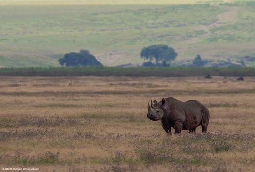 2019.06.09.4095 Rhinoceros
