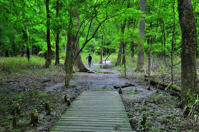 Nature Has Been Waiting for You to Come Visit! (Congaree National Park)