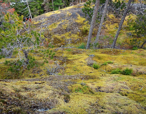 Mossy slope at Nairn Falls on the Duffey Lake Road (Hwy 99), BC, Canada