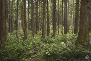 Bridle Trails State Park 2019