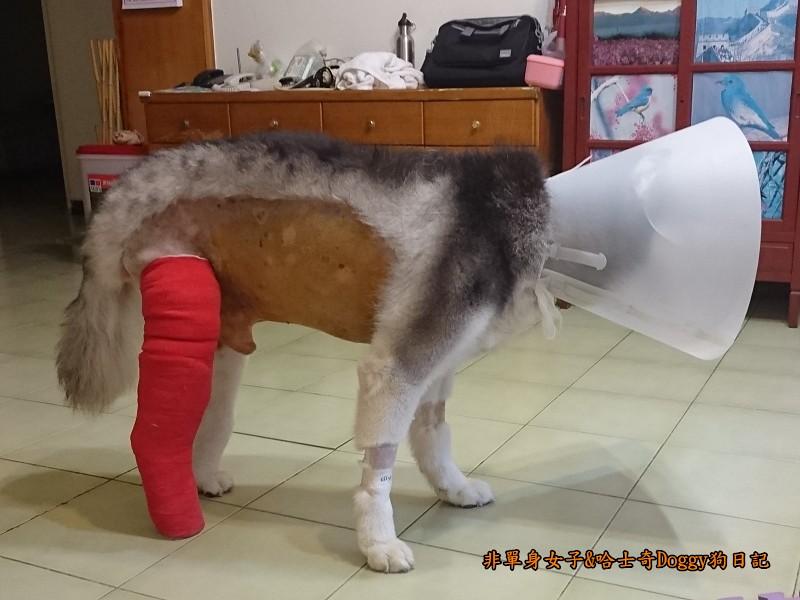 Doggy輔具08-1