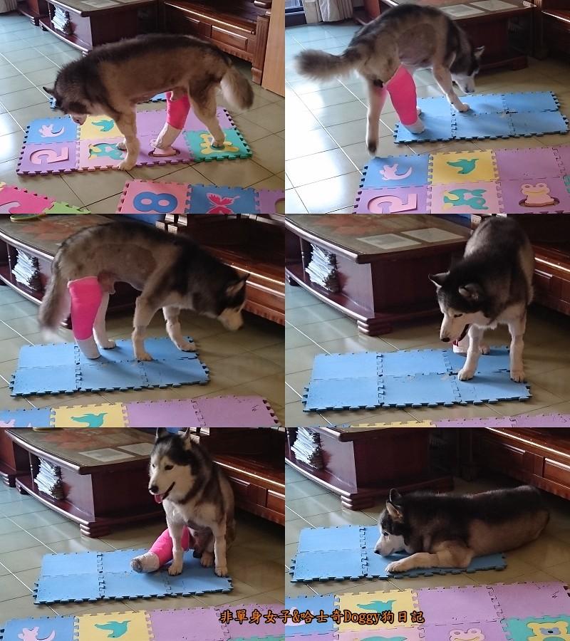 Doggy輔具07-2