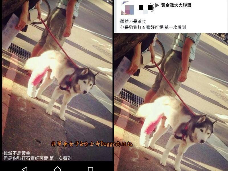 Doggy輔具05-1