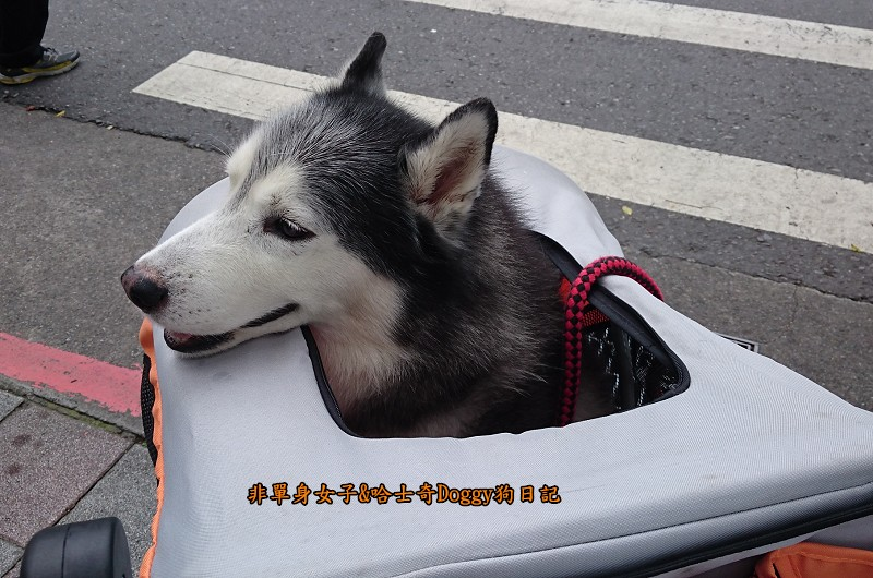 Doggy輔具04-6