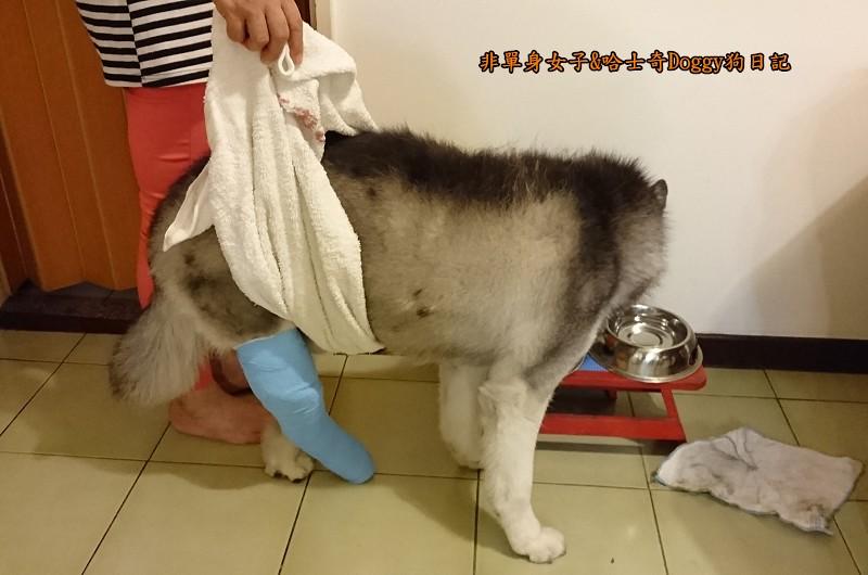 Doggy輔具01大毛巾