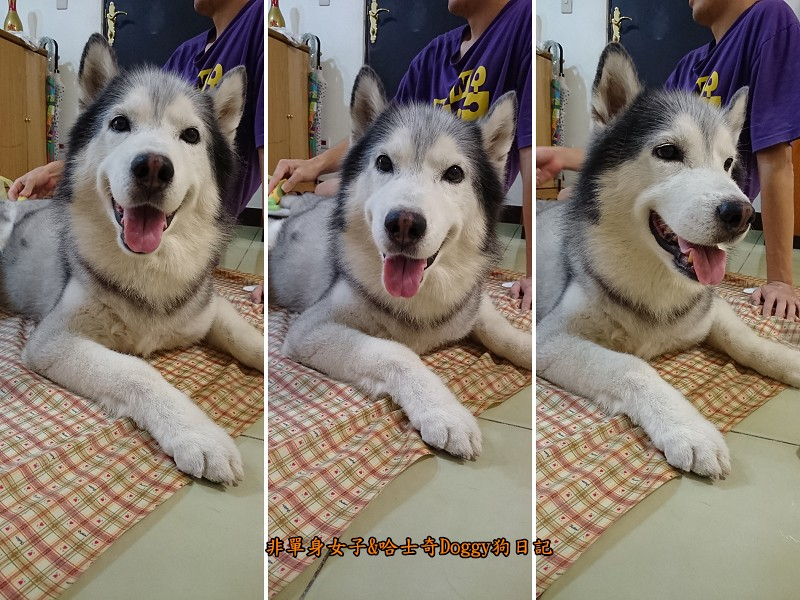 Doggy輔具06乾洗2