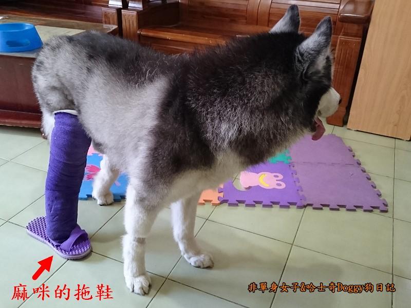 Doggy輔具03-4