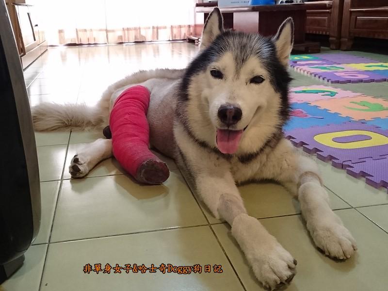 Doggy輔具03-2