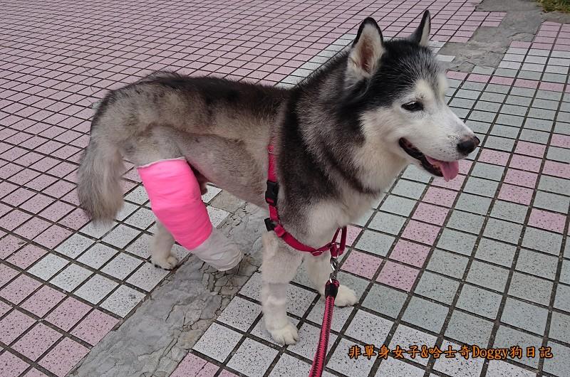 Doggy輔具09-1