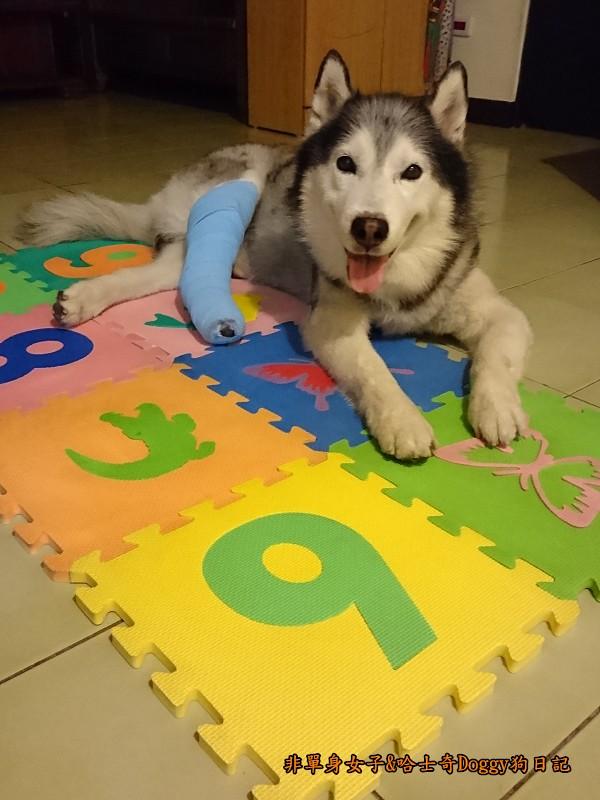 Doggy輔具02-2