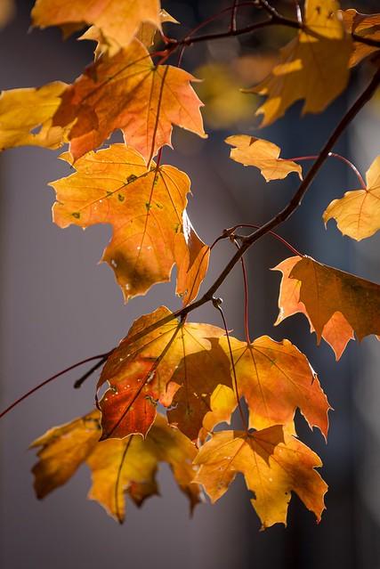 Autumn colors 🍂☀️🍁